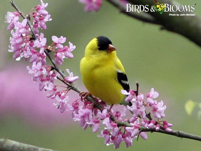 Proljeće - Page 5 Birdsblooms